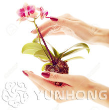 100PCS Mini Orchid-bonsai FLOWER plant For Home Garden Phalaenopsis Orchid plant , Buy-Direct-From-China Orquidea Semente(China)