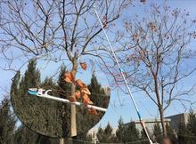 freeshipping 1730 high altitude picking pruning cut 3 m telescopic pruning picking garden tools
