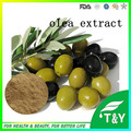 olive fruit extract/olive leaf extract/olive powder 1000g/lot