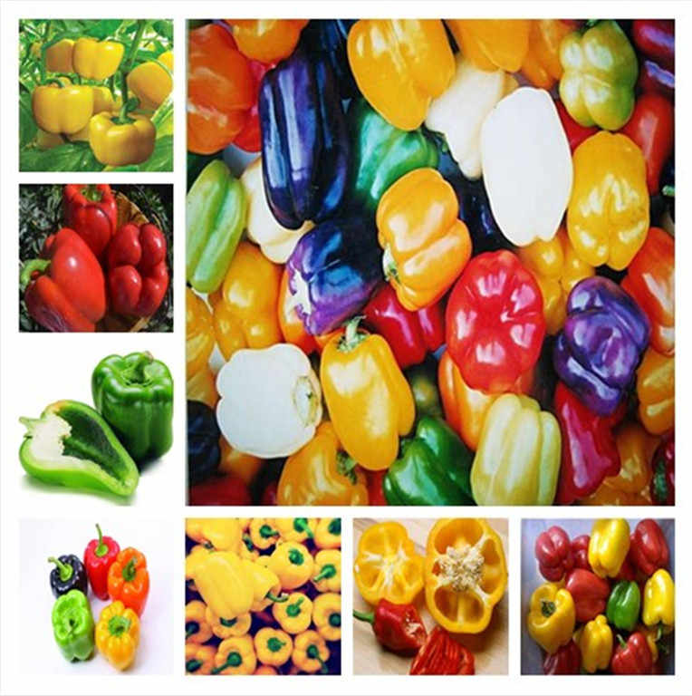 500 pcs Mixed Yellow Purple Red Green White Mix Sweet Pepper Bell Hot  bonsai Vegetables Paprika, Bonsai Plant for Home Garden