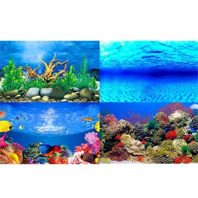 Animal Wallpaper: Freshwater Fish Wallpapers Desktop Background ...