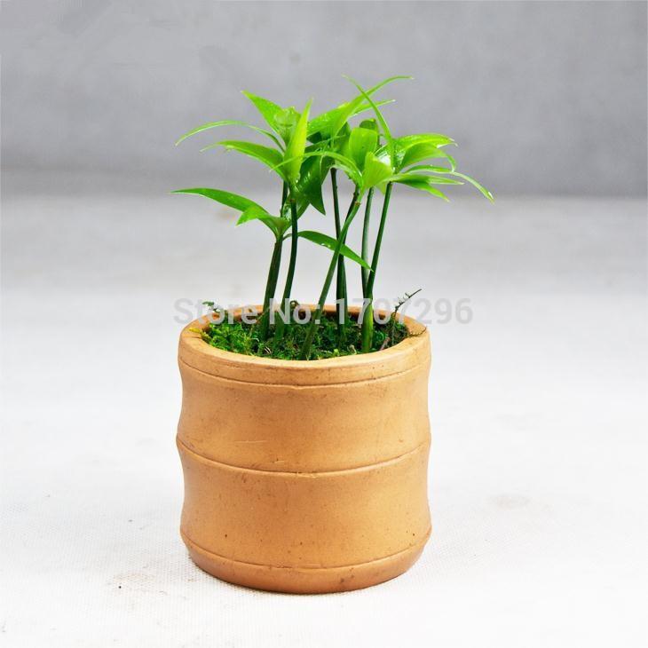 de escritorio pequeas plantas en macetas fruto grande nageia semillas unidslote
