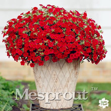 100PCS Petunia seeds  Flower Seeds Four Seasons Can Be Planted 16 Kinds of Colors This Is Flower Seeds Rare for DIY Home Garden