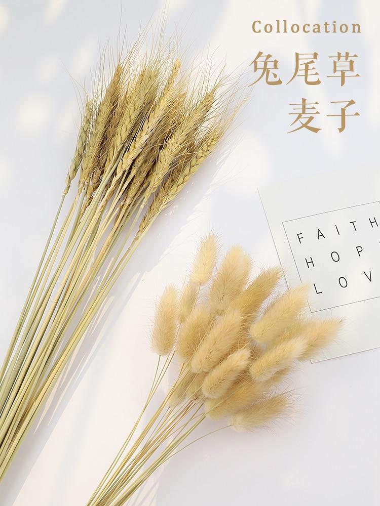 Реквизит для фотосъемки с естественным ячменным пшеничным ушами лапрантусом кроличьим хвостом травой фоновые Декорации для фотостудии Ак...