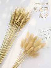 Natural Barley Wheat Ears Lampranthus Rabbit Tail Grass Photography Props Photo Studio Background Backdrops Accessories Ornament