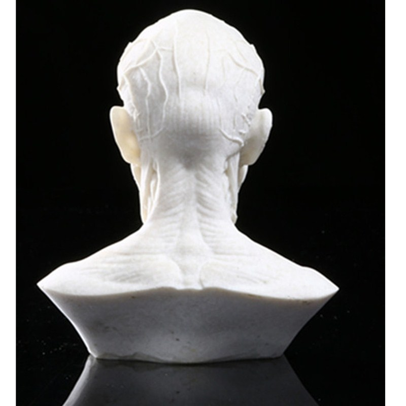 European Style Simulation Human Body Half-Length Photo Or Portrait Skullcandy Sculpture Line Drawing Teaching Aids L999