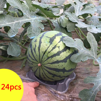 24 Pcs Plant Garden Plastic Melon Support Cradle Prevent from Rot for Watermelon Pumpkin Fruit plant fungicides flowers and trees carbendazim systemic fungicide to prevent the root rot stem rot powdery mildew