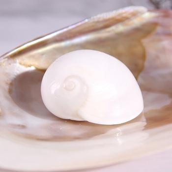 2 sztuk naturalna muszla biały księżyc powłoki naturalne powłoki zbiornika xieqiao muszle rozgwiazdy tanie i dobre opinie Happy Kiss Maskotka Organiczny materiał MEDITERRANEAN
