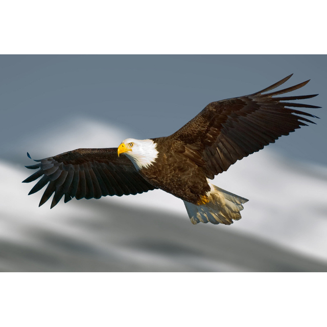 Full diamond painting the flying eagle diy diamond embroidery full diamond painting the flying eagle diy diamond embroidery american style picture decorated living room good altavistaventures Gallery