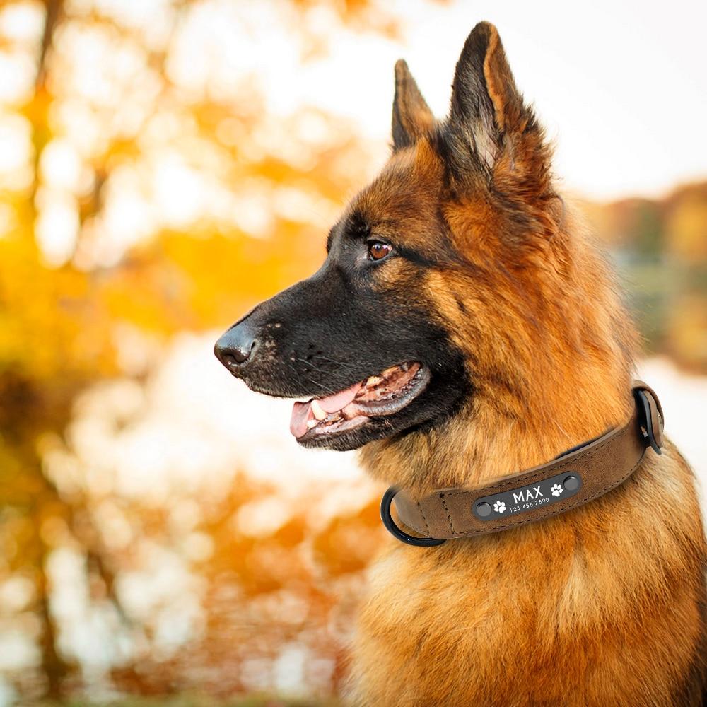 collier pour chien avec identification