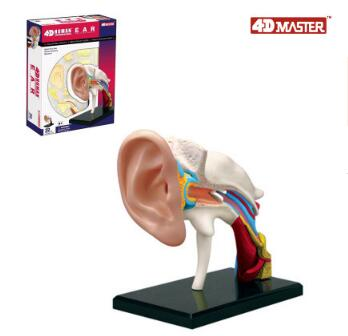 4D ear anatomy model 22 component models, new 3d ear model. robin hood 4d xxray master mighty jaxx jason freeny anatomy cartoon ornament