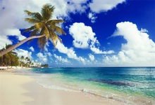 Laeacco Summer Sea Beach Palm Tree Scenic Photography Backgrounds Customized Photographic Backdrops For Photo Studio