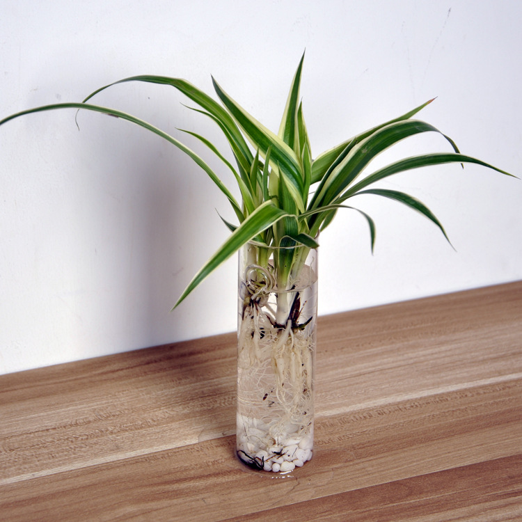 creative home living room decor cilindro de vidrio mini botella florero colgante de pared de