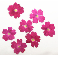 2015 Dyed Verbena BLUE Pressed Flower For DIY Material Wholesale Free Shipment 100 Pcs