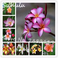 100-particles-rare-beautiful-flower-seeds-table-decorations-flower-seed-Foam-Frangipani-Plumeria-Flower-Wedding-Party.jpg_200x200