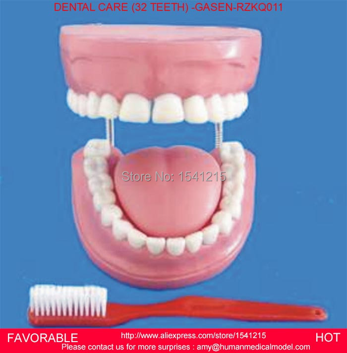 DENTAL TOOTH TEETH ANATOMICAL ANATOMY MODEL ,ORAL DENTAL TEACHING MODEL GREAT CARE FULL PINK TOOTH 32 TEETH -GASEN-RZKQ011 teeth model tooth models mouth oral care brushing teaching study model adult standard multifunction dental care gasen den002