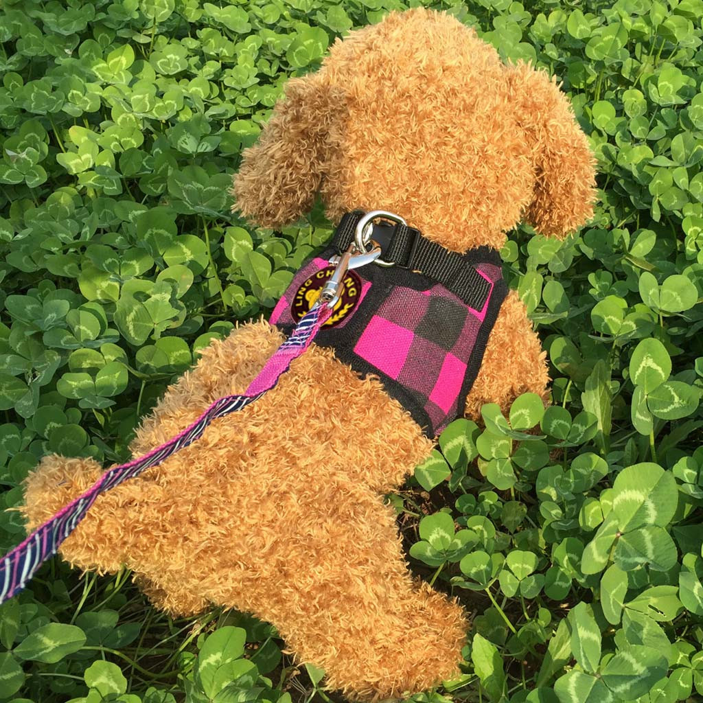 Pet Dog Harness and Leash Teddy vest puppy chest strap Adjustable Pet Dog Breathable Traction Lattice Printing Chest Strap