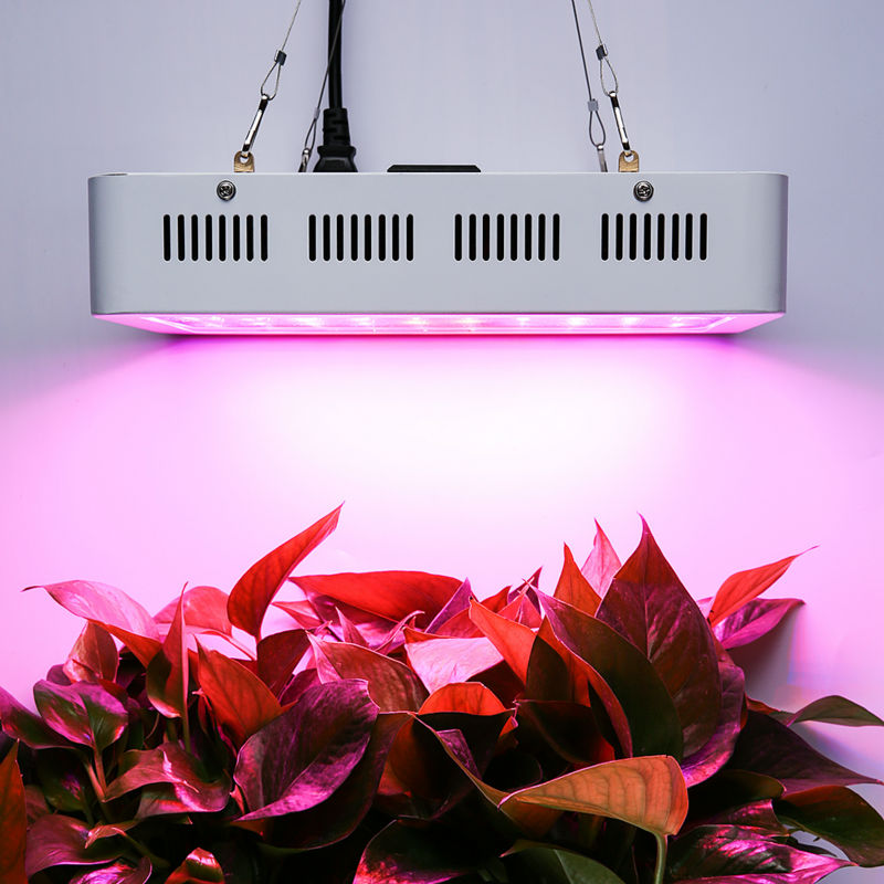 800 لامپ LED در حال رشد برای گیاهان در حال رشد هیدروپونیک داخلی تراشه دو جداره 10 لامپ با قدرت بالا