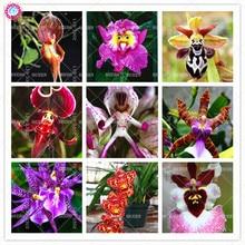 50pcs Mix Bizarre Phalaenopsis Seeds Beautiful Funny Orchid Bonsai Flower Seeds Ornamental Room Decoration Plants Best packaging