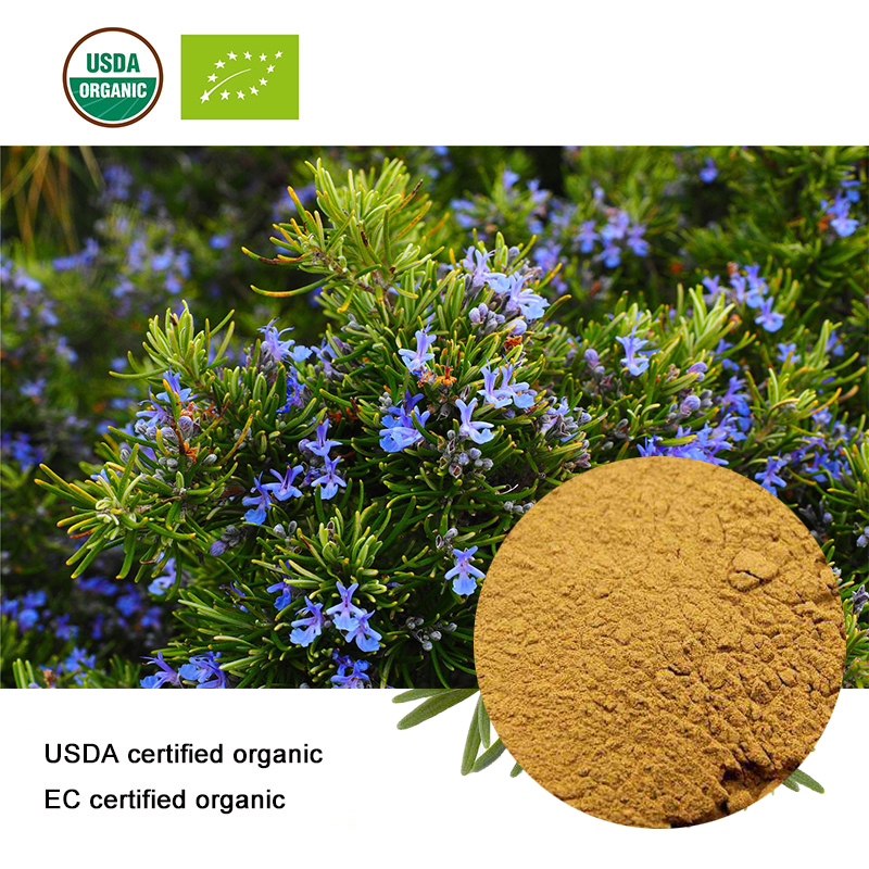 USDA And EC Certified Organic Rosemary Extract  10:1