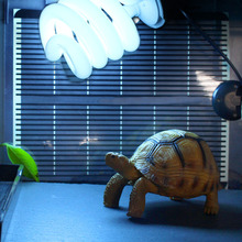Reptile Tortoise Light Bulb Fluorescent Vivarium Lamp