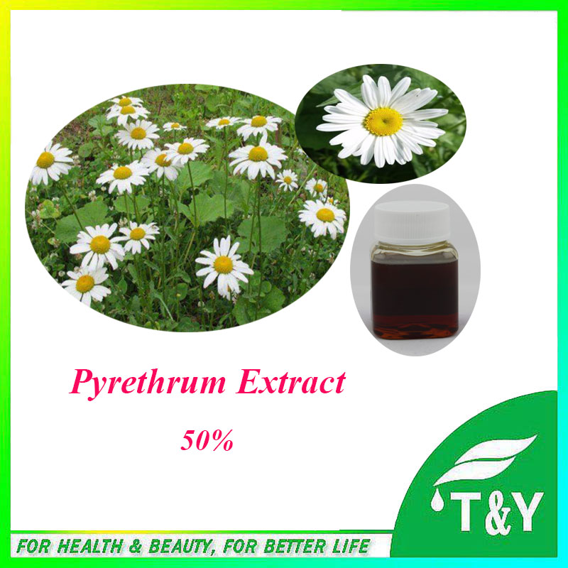 100% natural & pure Pyrethrum Extract. with free shipping, 50% pyrethrin pure natural radix sophorae flavescentis extarct kuh seng extract 100g lot