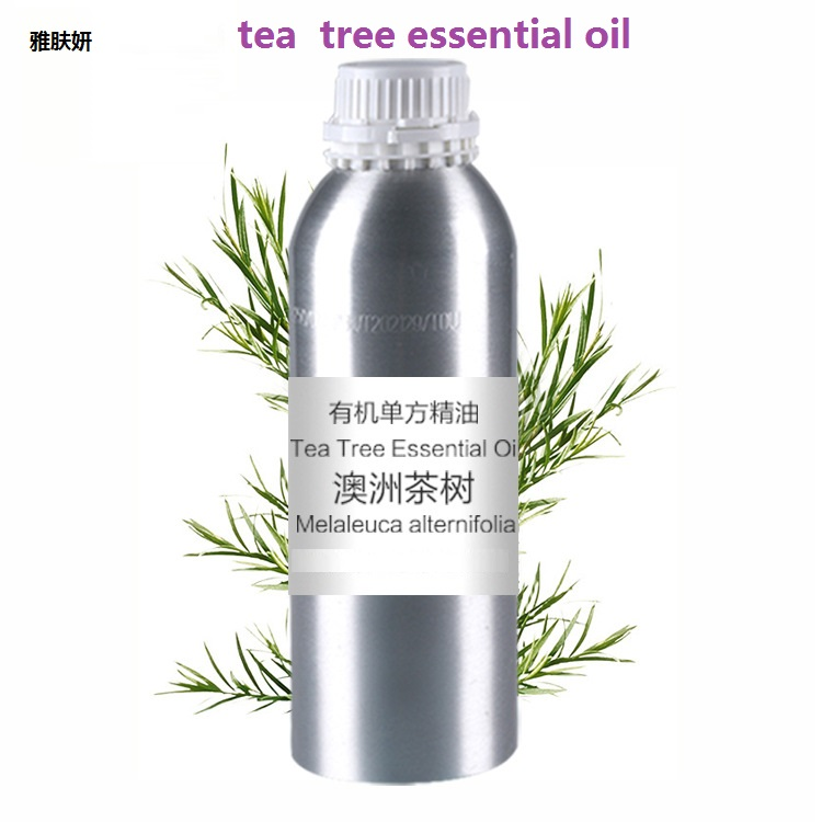 Cosmetics 50g/bottle Chinese herb Tea tree extract essential base oil, organic cold pressed Tea tree oil coconut oil extract cold pressed natural healthy oil for aromatherapy hair