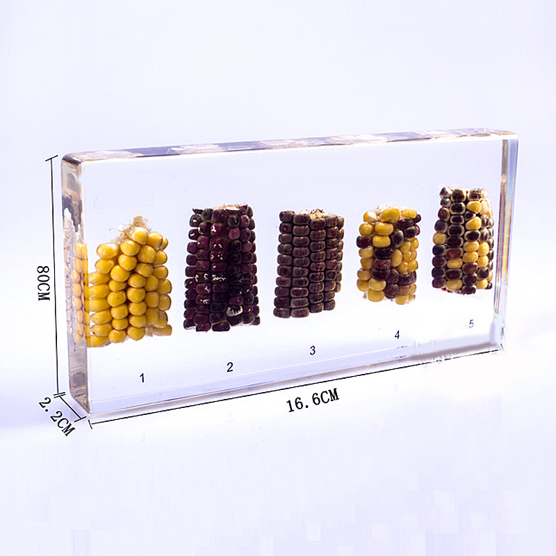 DNA Pattern of Corn Set Rule of Gene Isolation in Clear Block Learning Aid Verification Of Gene Isolation Rule Specimens isolation of polypropylene degrading fungal isolates