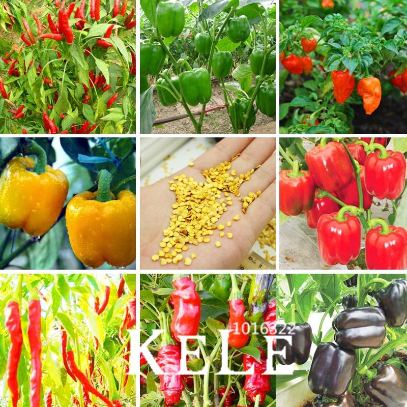 Venta! 100 unids 13 variedades de hortalizas y Rojo amarillo verde ...