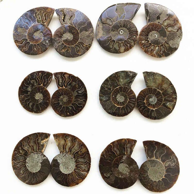 2 個玉虫色アンモナイトプリティナチュラルマダガスカル化石標本ヒーリング天然水晶