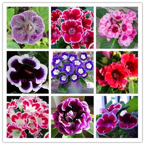 100 pcs marigold flower seeds bonsai home garden flowers seed for flower pot planters