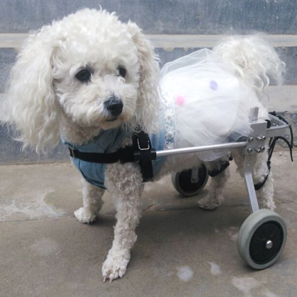 S/M/L Light Portable Adjusted Taken Apart Pet Wheelchair Walk Traction Rope Cart Kit For Handicapped Cat Dog Doggie Puppy Choose image