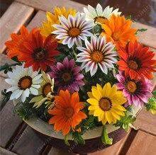 100% Real mix colors gazania flower seeds bonsai flower seeds rare chrysanthemum seeds potted plants for home garden 20 pcs/bag