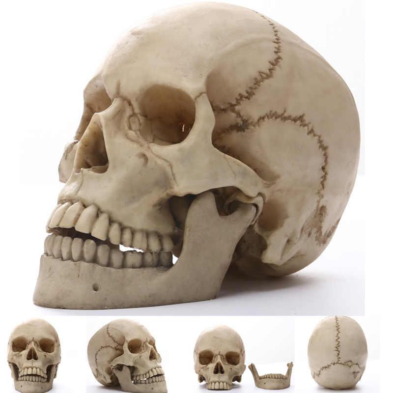 פסלי גולגולת אדם אפריקה בית תפאורה גולגולת עבור קישוט בעלי החיים גולגלות מופשט פסלי שלד גילוף חיים גודל 1:1