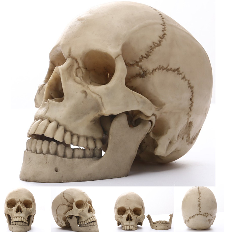 Statues Skull Human Africa Home Decor Skull For Decoration Animal Skulls Abstract Sculptures Skeleton Carving Life Size 1:1