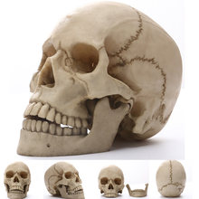Statues Skull Human Africa Home Decor Skull For Decoration Animal Skulls Abstract Sculptures Skeleton Carving Life size 1:1(China)