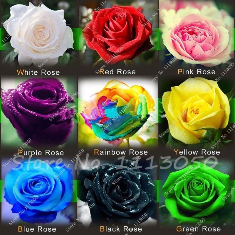 Promoção de Venda quente Muito Fácil Pratos de Sementes de Produtos Hortícolas frete Grátis 9 Tipos de Sementes Híbridas de Rainbow Rosas Semente 200 peça