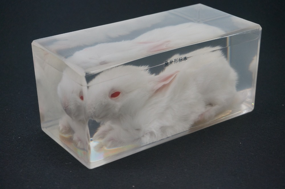 Real Rabbit Specimens In Clear Lucite Block Educational Instrument fishbone fispecimens in clear lucite block educational instrument middle school biology school teaching aids