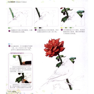 Image 5 - Colored pencil flowers and birds Drawing tutorial art book Really hand painted flowers and plants picture album Painting Book