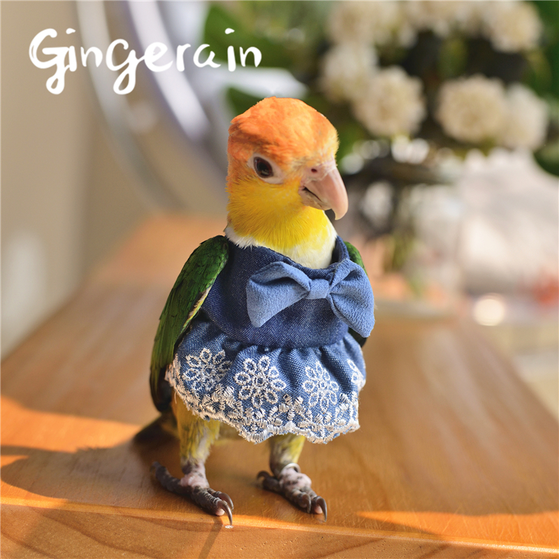 Gingerain Bird Clothes Parrot Clothes Lace Tutu Original Hand-made Custom Bird Clothes Lace Tutu