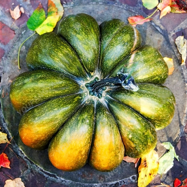 20pcs Ornamental Pumpkin plants Colorful Cucurbita Pepo Organic Decorative Pumpkin Fruit Vegetable plants For Home garden