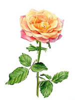 High Quality To Lovers Gift DIY 5D Watercolours Painting Flowers Diamond Painting Beautiful Rose Cross Stitch