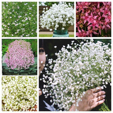 100PCS Beautiful Aromatic Gypsophila Seeds True Starry Seeds Flower Seeds Potted Gypsophila Paniculata