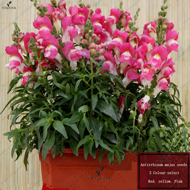 Common Garden Plants online buy wholesale common garden plant from china common garden