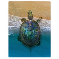 HommomH Blanket Tropical Lovely Turtle Sea Throw Comfort Warm Soft Plush Throw For Sofa