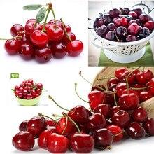 Cherry bonsai Terrace Potted Fruit Cherry / Black Pearl bonsai 5pcs cherry adair black magic