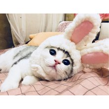 Cartoon Costumes-Cute White Rabbit Ear Shaped Dogs Cats Hat Cap Dog Kitten Cosplay Headband Headwear(China)