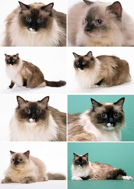 Postcards High Quality Picture Animal Cute Cats Cat 8P1   15*10.5 cm, Wholesale & Retail