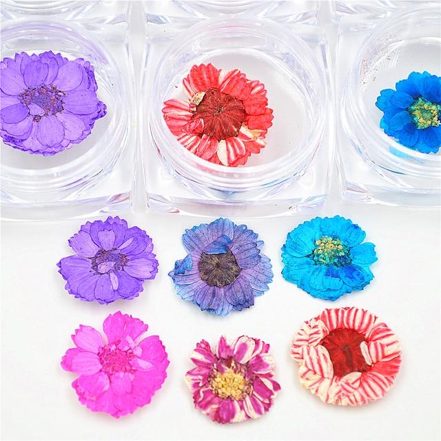 6 Pots Fresh Daisy Dried Flowers 3d Nail Art Wheel Decoration