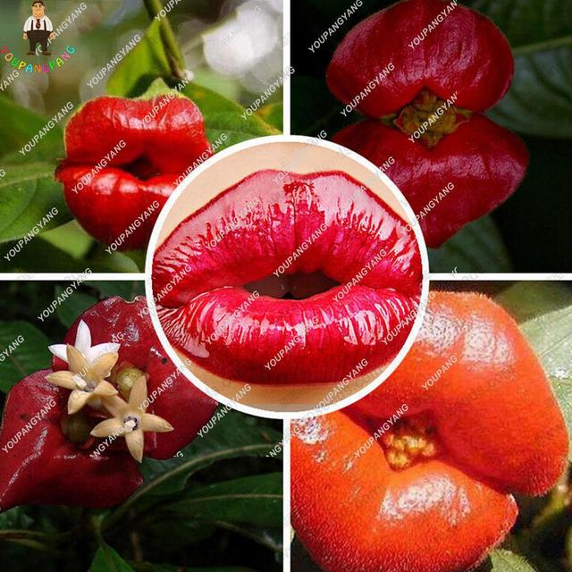 Exotic Red Lips Plants Rare Flower Pots Garden Flowers Park Yard Plant Psychotria For